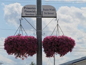 cib_hanging_baskets-058-300x225